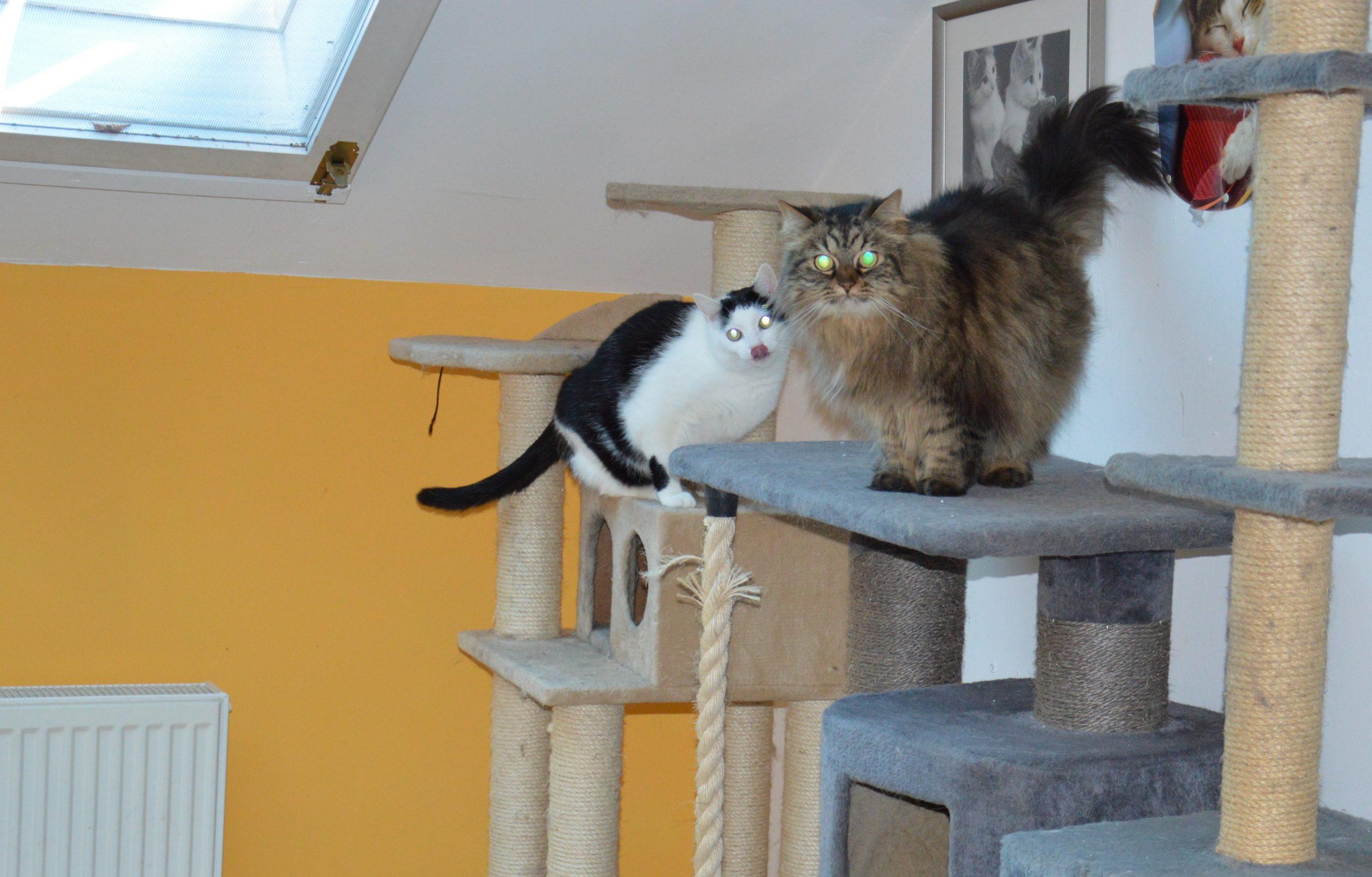 Unsere Katzenzimmer (01)