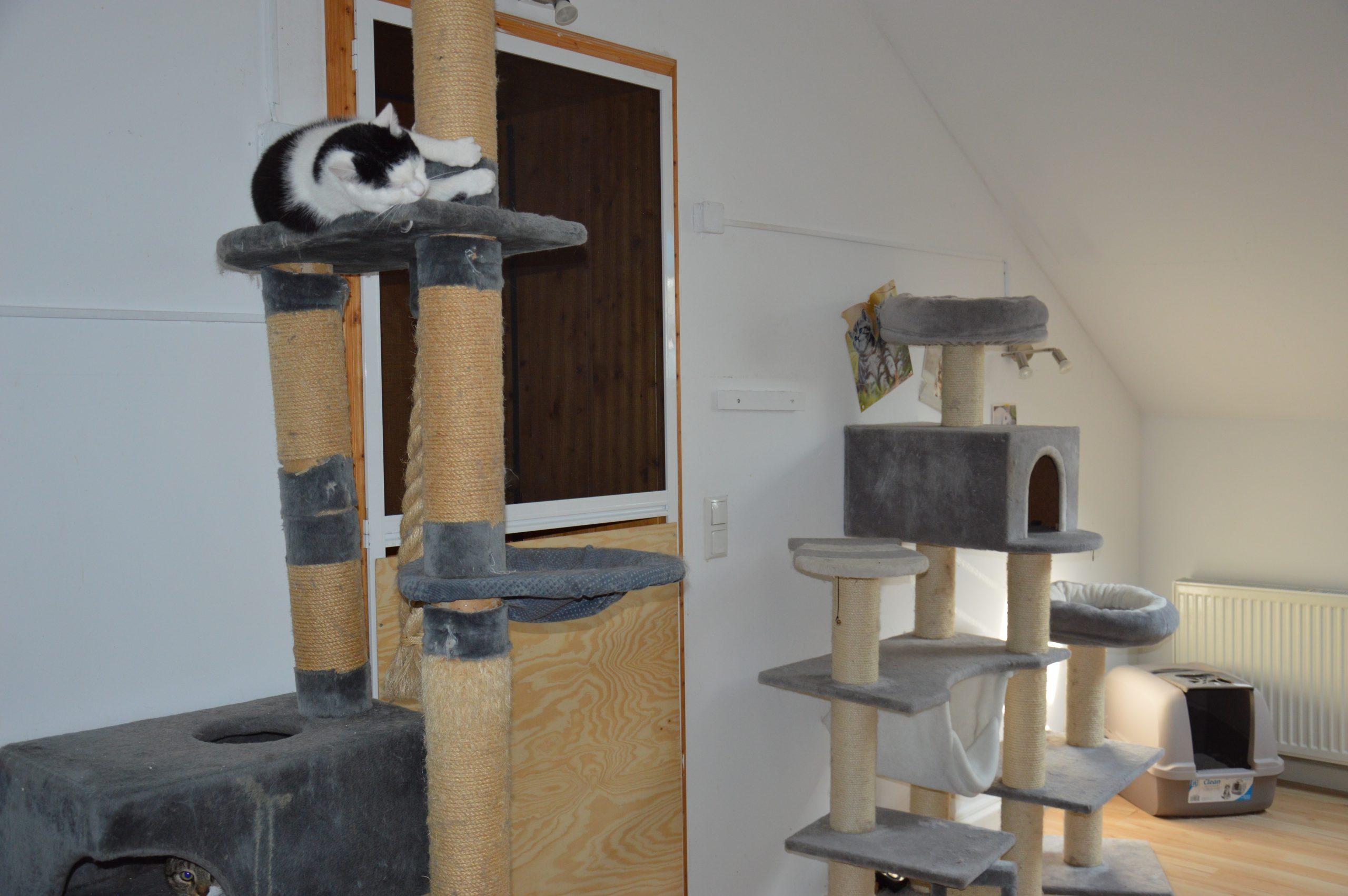 Unsere Katzenzimmer (03)